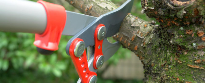 Thinking of Pruning?