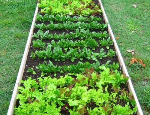DIY Fruit & Veggie Gardens