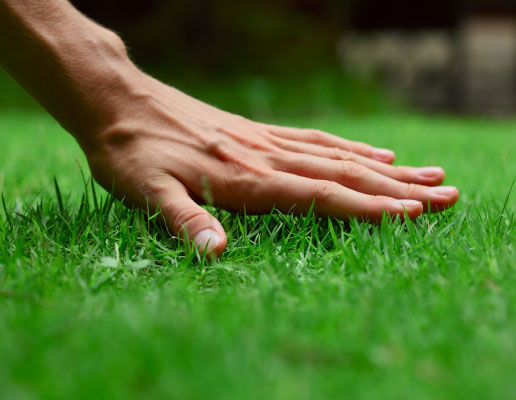Fertilizing Service in Burlington, Hamilton & Oakville