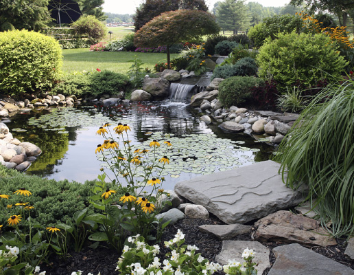 Backyard Pond Contractor in Oakville