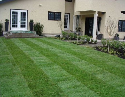 sod installation contractor in Oakville Ontario