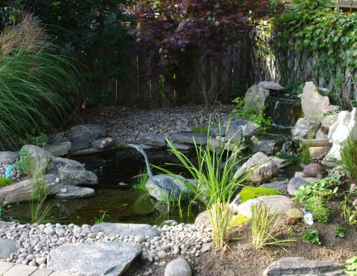 Backyard Pond Contractor in Burlington