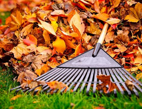 Readying Your Lawn & Garden For Winter