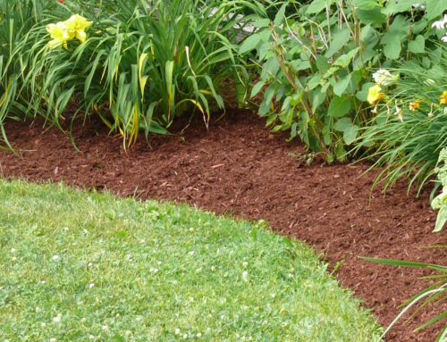 Types of Organic Mulch