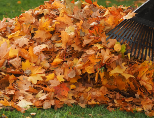 What Happens To Your Fall Yard Waste?